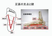 足底の支点と腱NEW.jpgのサムネイル画像
